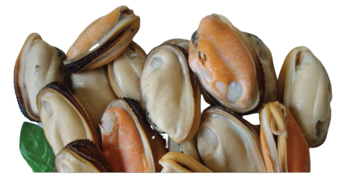 Green lipped mussels